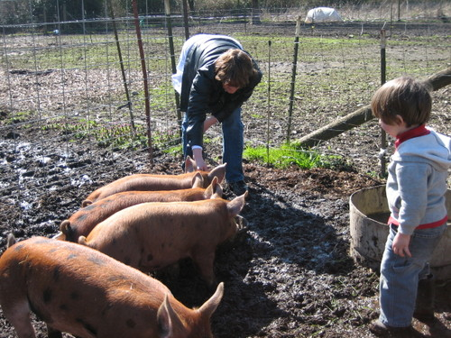Tamara , Piglets and Cosmo